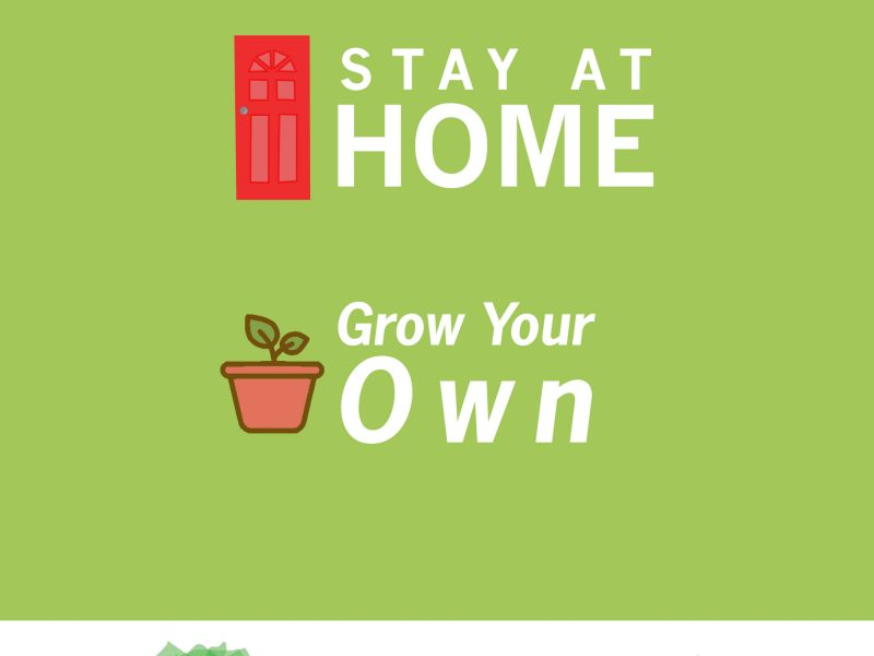 Stay at Home, Grow your Own in Chelmsford!